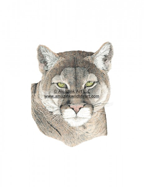 Impervious - Cougar-Puma - IN0014