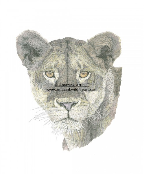 Malkia wa Africa - Female Lion - IN0008