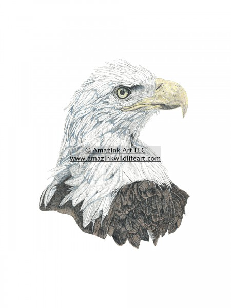Watchful Eye - Eagle - IN0006