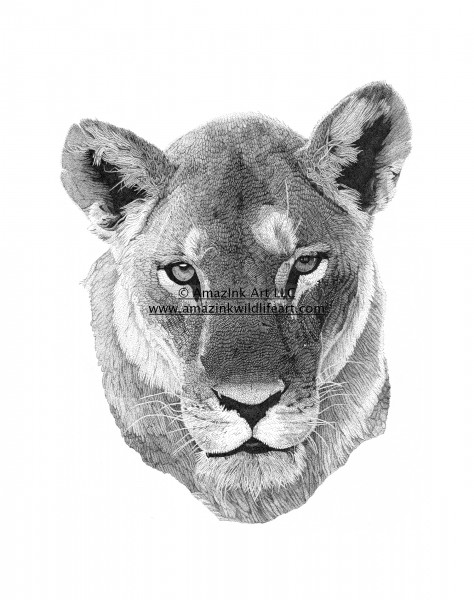 Fierce Pride - Lioness - IN0010