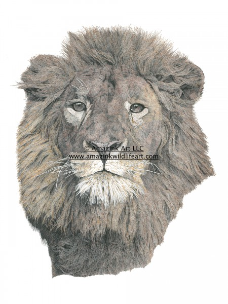 Pursuing Eyes - Male Lion - IN0011