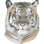 A Wild Mystical Illusion - Tiger - IN0018