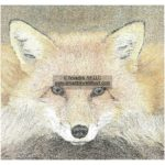 Artful Fox - Reflections of the Forest